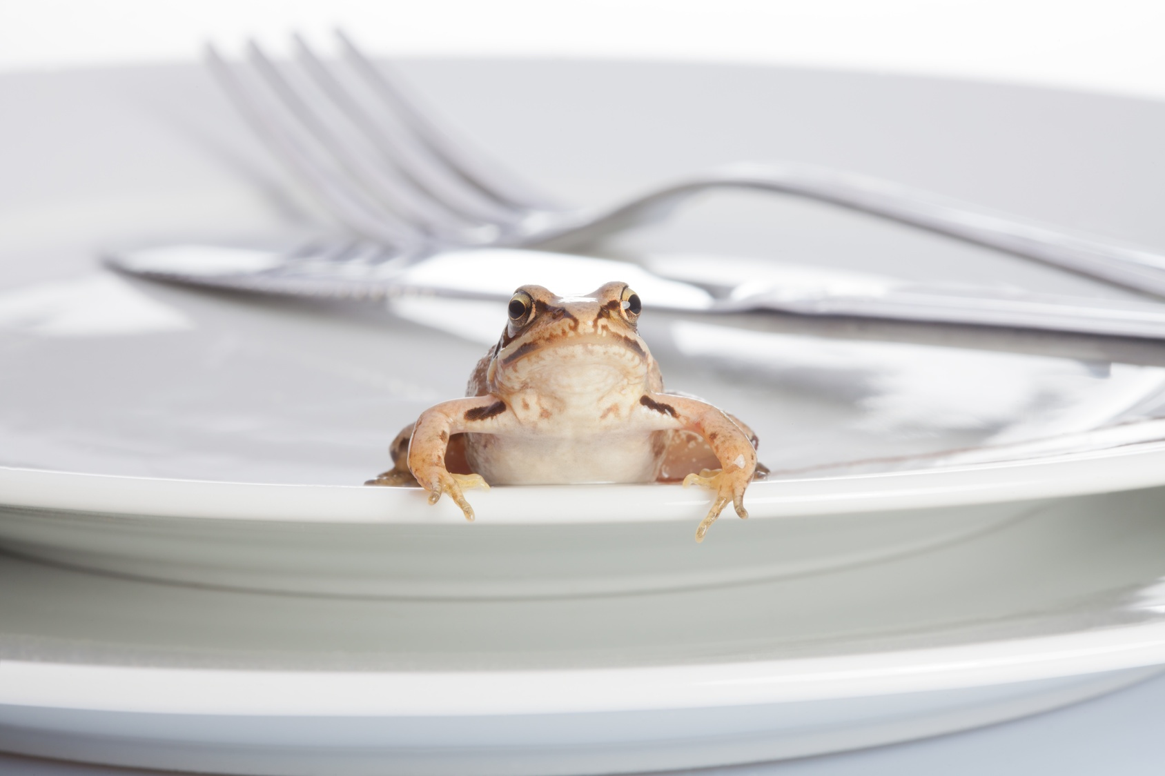 Frog For Breakfast